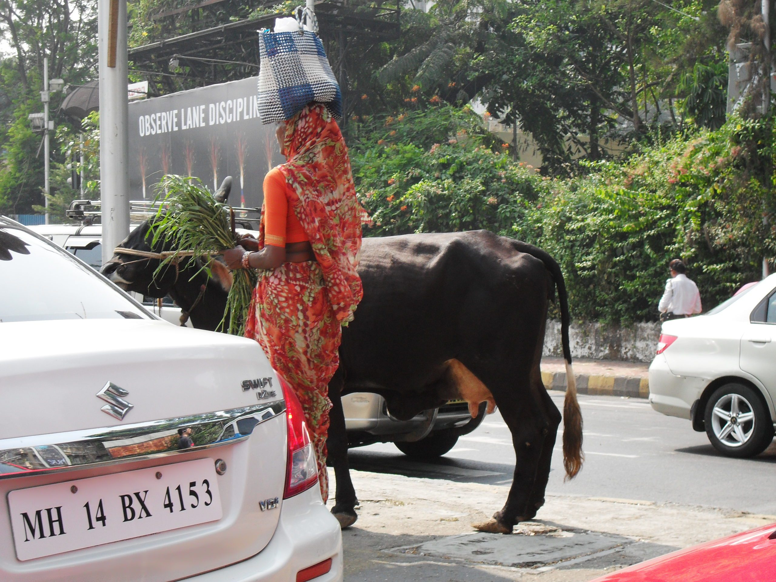 woman in a pink saree walking with a cow in traffic