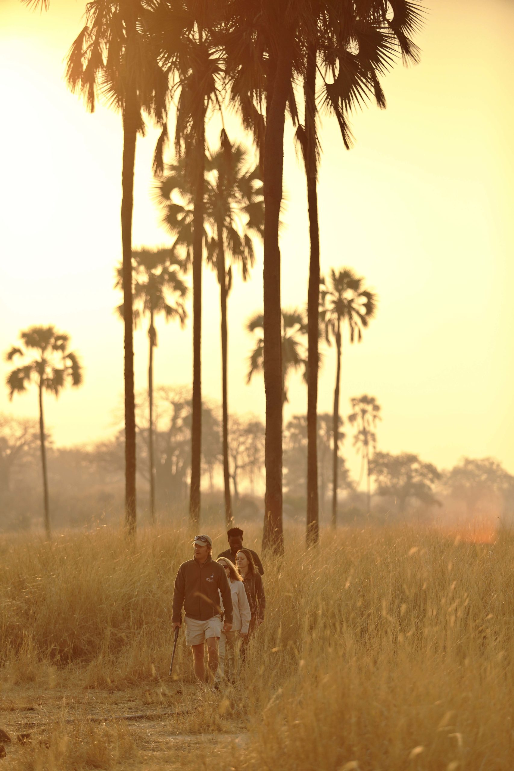 walking safari through the golden grass and palm trees at sunset in Ruaha on Tanzania safari