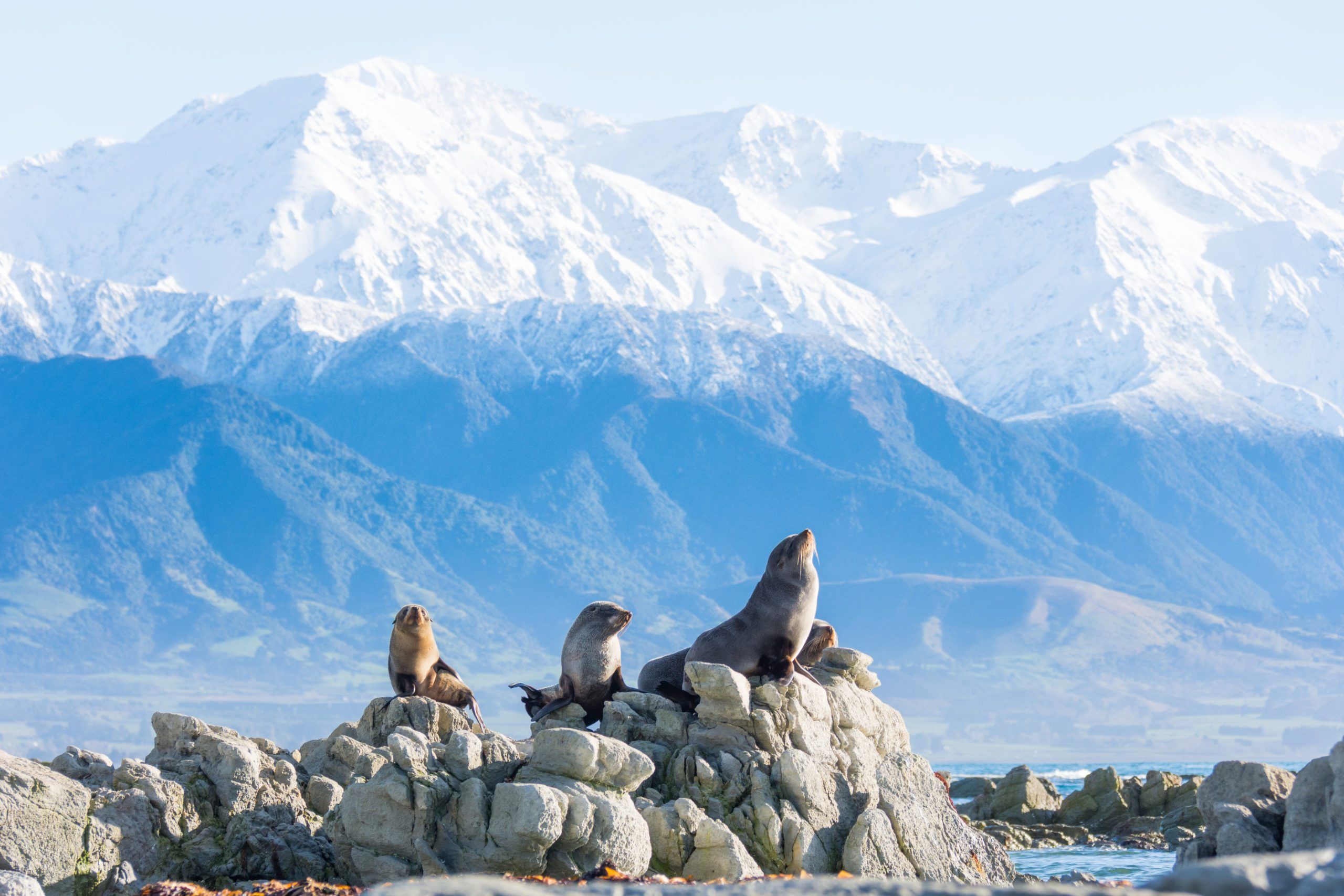 seals atop some rocks with snowy mountains in the background