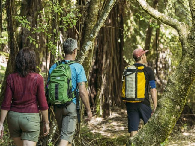 Three hikers walk through the forest on the Abel Tasman Coastal Track