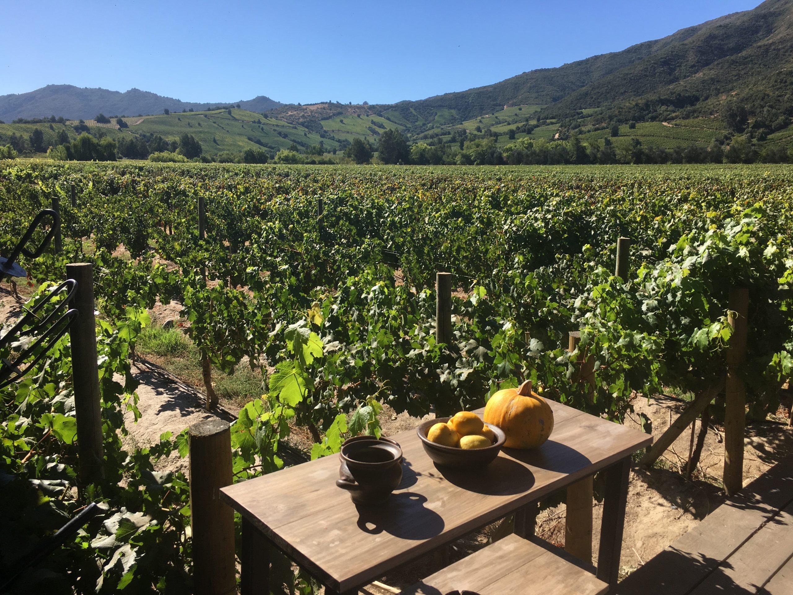 colchagua valley vineyards seen from Fuegos de Apalta