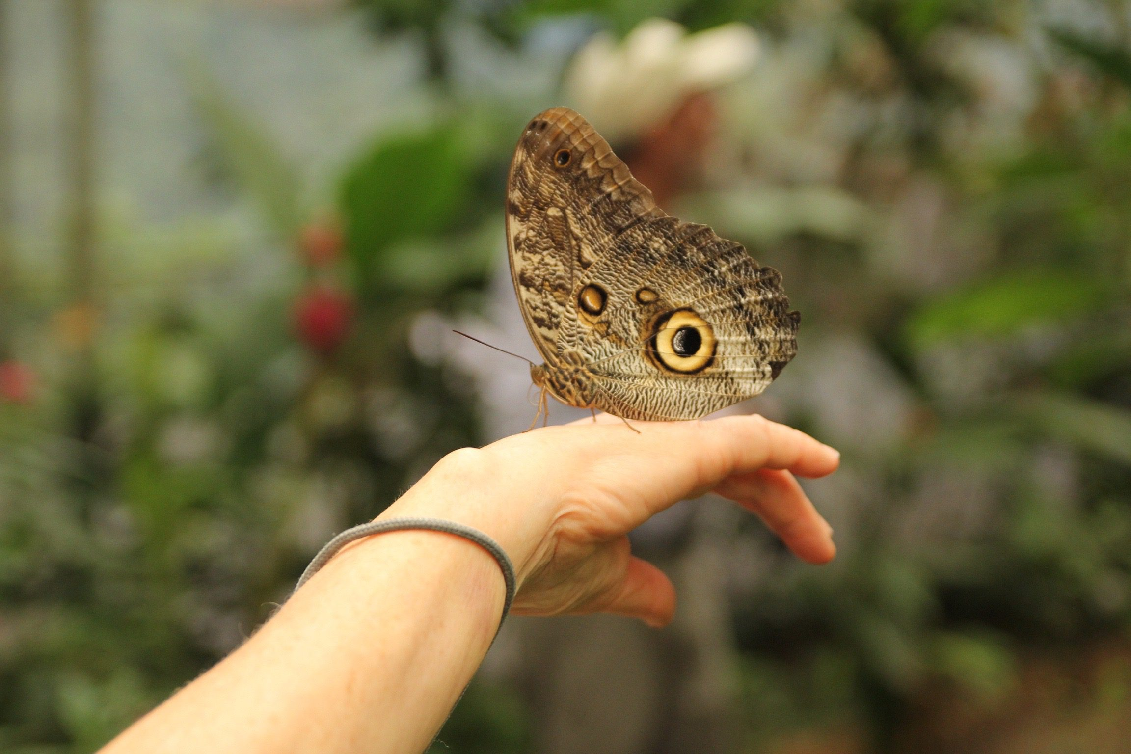 moth on hand in cloud forest
