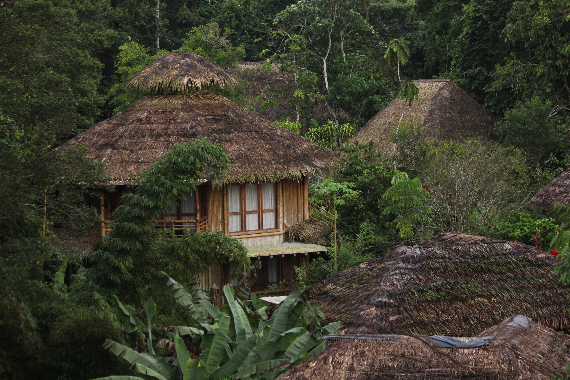 Eco lodge in jungle in Ecuador Amazon
