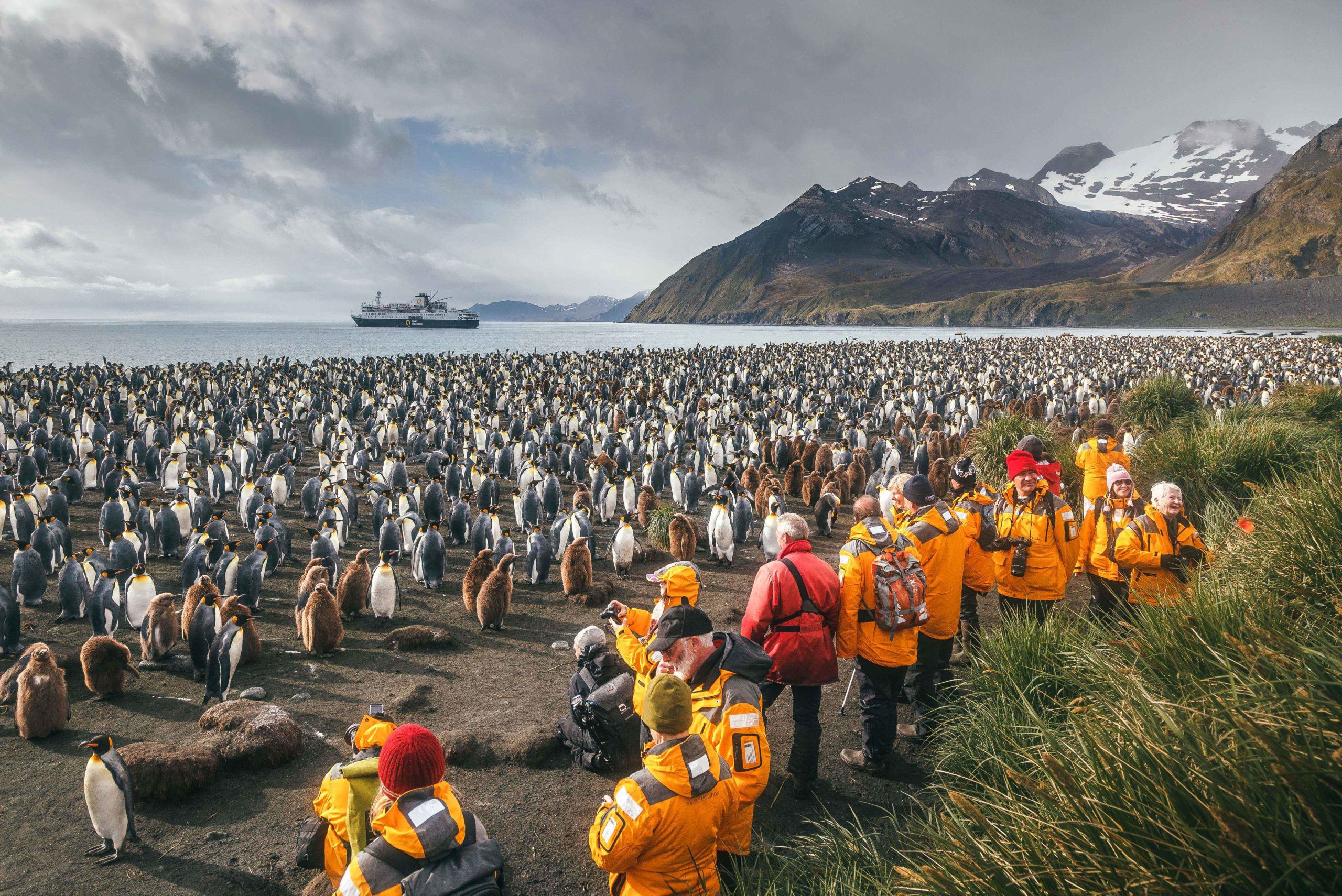 colony of King penguins on the beach of South Georgia, guests in yellow jackets taking photos, ship moored in the distance