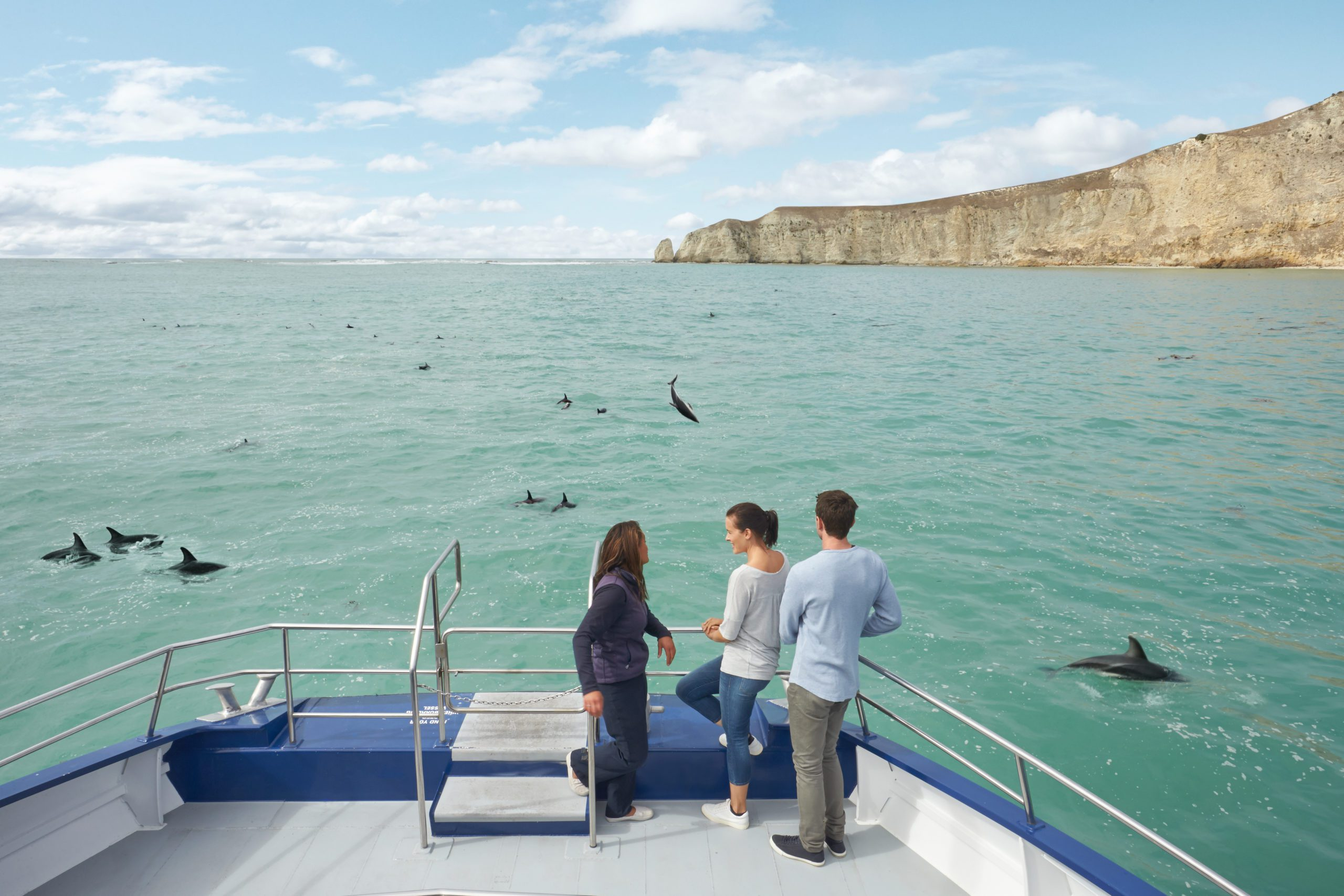 People riding on a dolphin-viewing boat with dolphins breaching all around them.