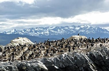 colony of penguins off the coast of Ushuaia with mountains in the background