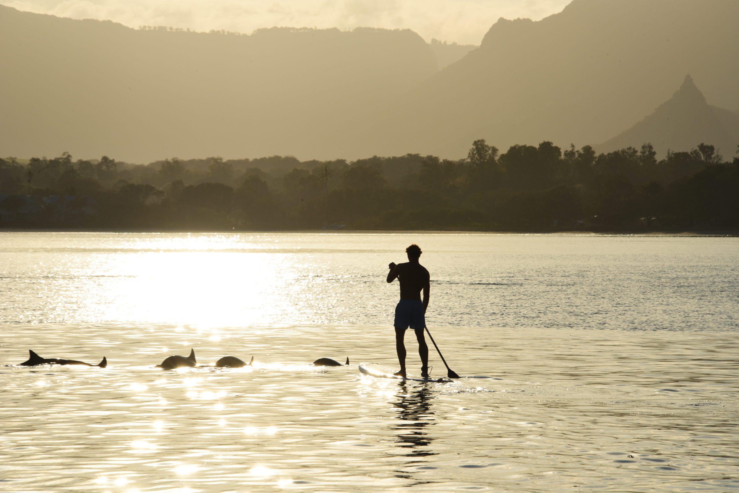 paddleboarder with dolphins at sunset on Mauritius safari