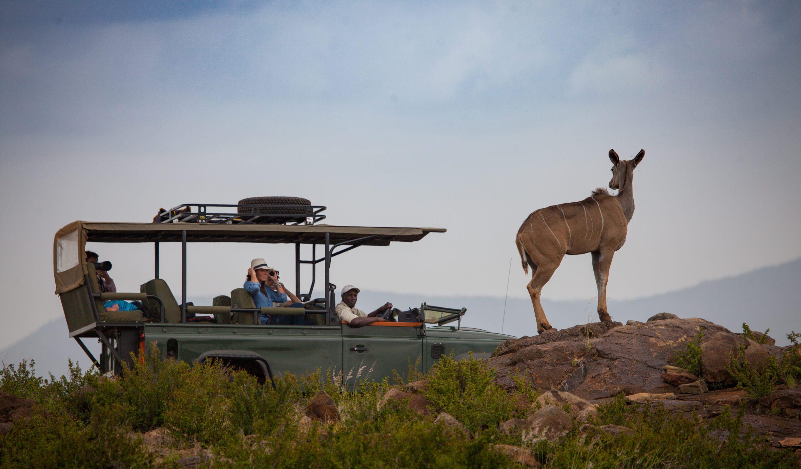 elewana loisaba tented camp luxury kenya safari vehicle observing an Eland
