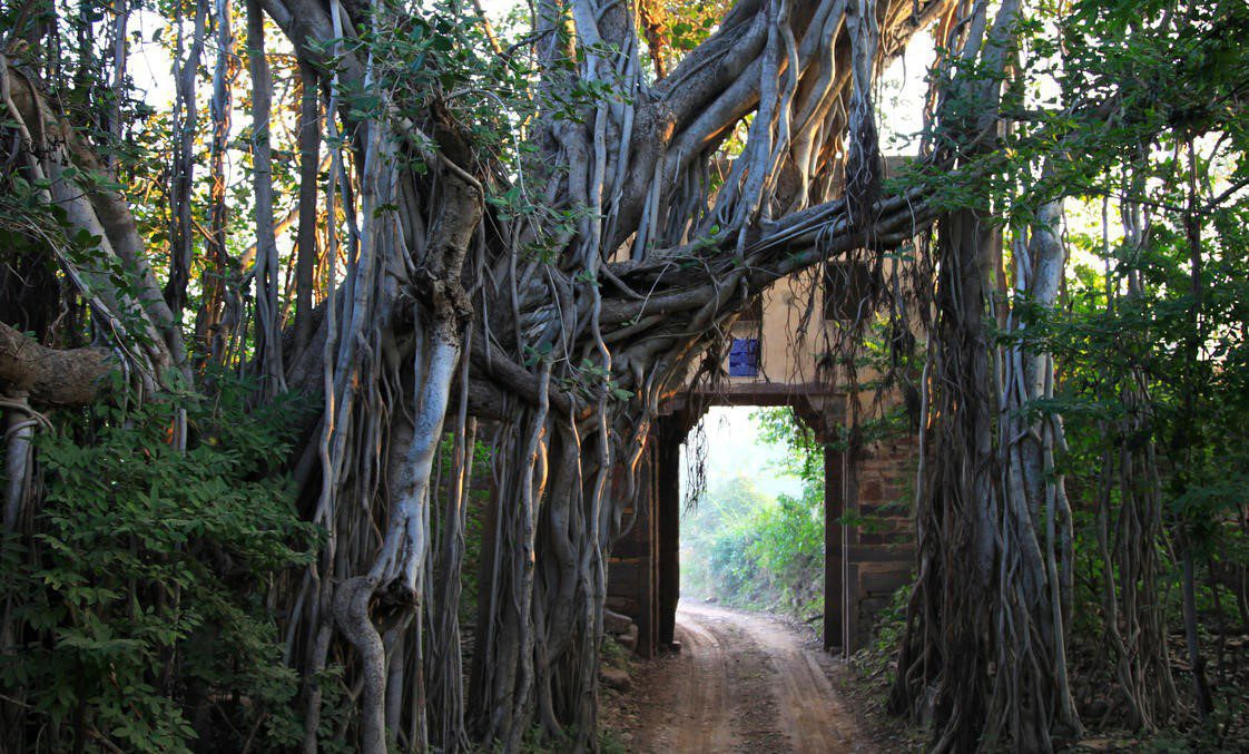 ancient doorway covered by tree roots