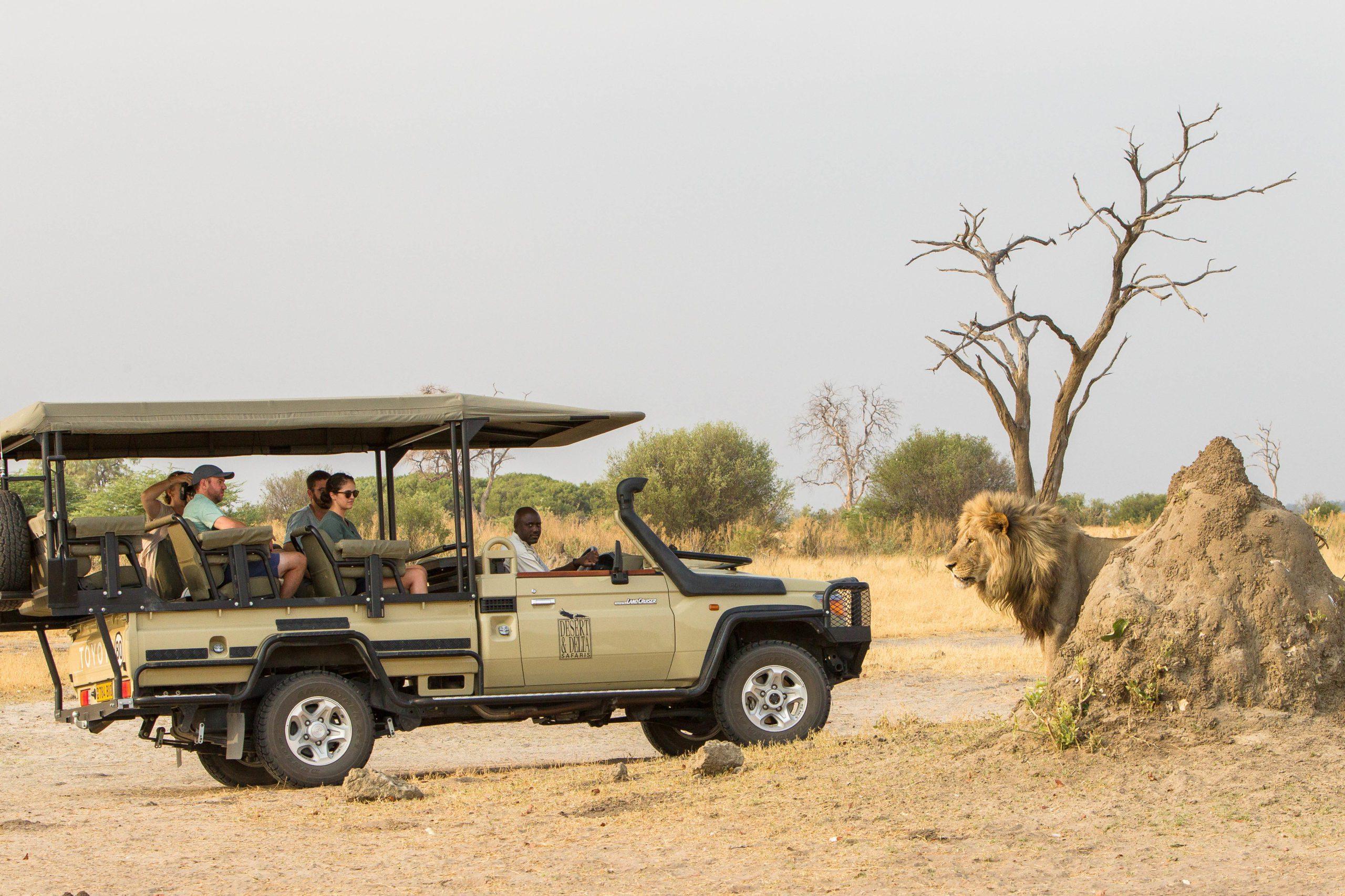 Savute Safari Lodge game drive encounter with a full grown male lion on our best Botswana safari