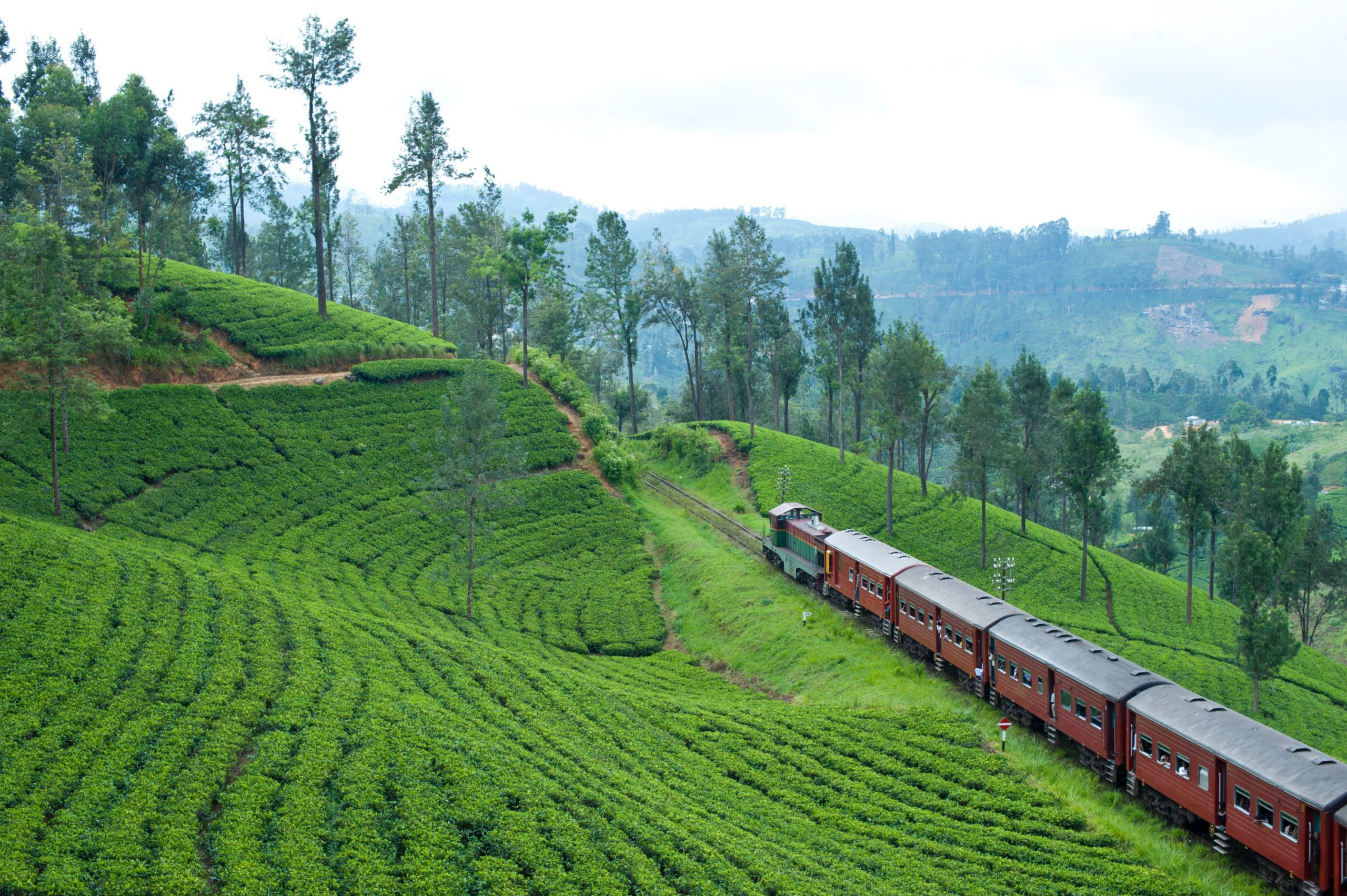 train going through the lush hillsides and tea plantations of sri lanka on an Indian Subcontinent safari