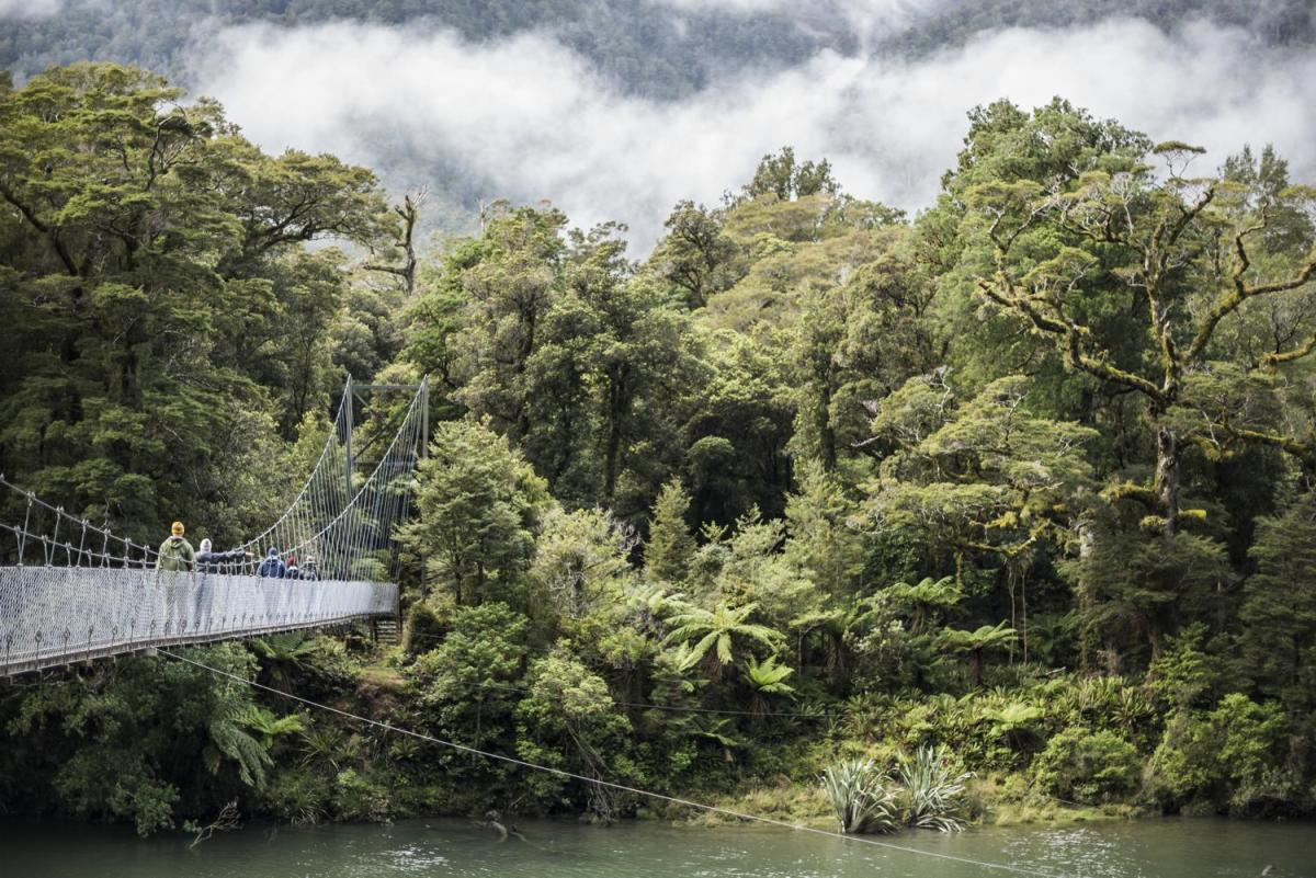 lush native green forests with a pedestrian bridge crossing a river on the Hollyford Track on New Zealand's South Island tour