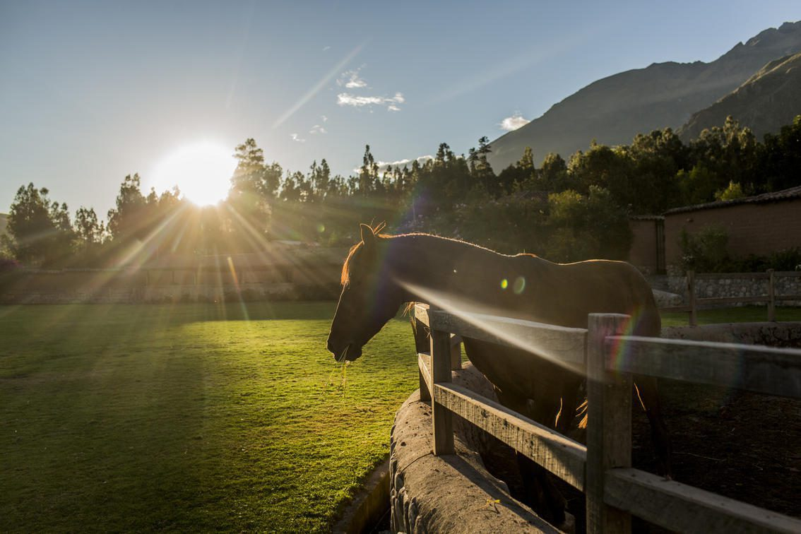 horse in an outdoor pen with the sun peaking through the trees on this Ecuador & Peru holiday