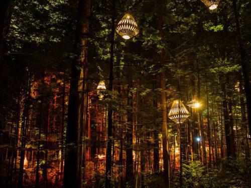 whakarewarewa redwood forest at night