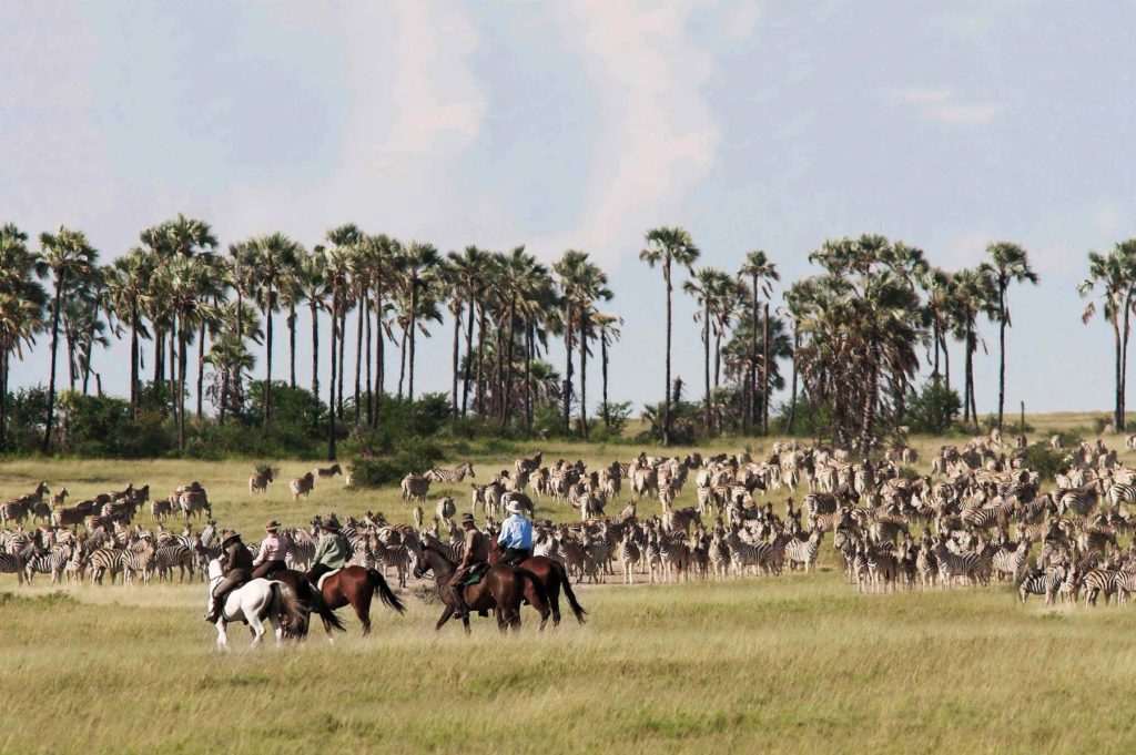 horseback riding around the herds of the zebra migration in Botswana