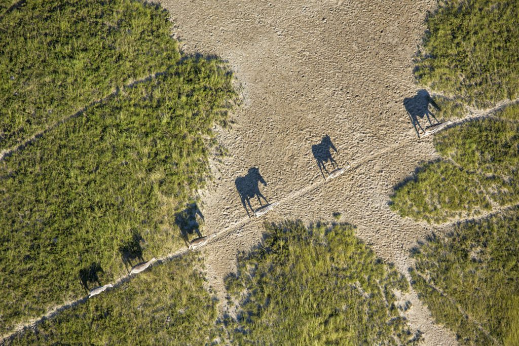 zebra migration seen from the air