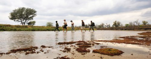 walking safari along a shallow body of water in north luangwa