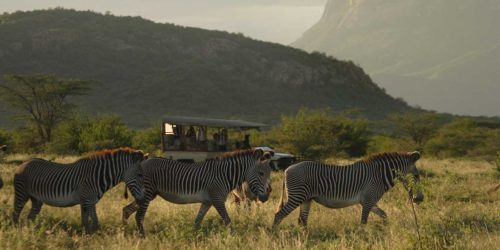 zebras crossing in front of a game drive vehicle at Saruni Samburu with hills in the background