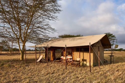 mobile tented camp set up under a canopy of acacia trees in the Serengeti plains