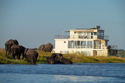 White cruise with big windows surrounding by elephants on the Chobe River