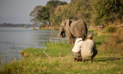 two people crouch beside a river watching an elephant at the water's edge