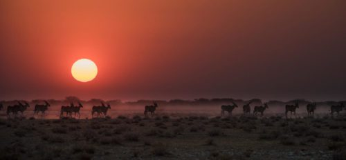 wildlife walking across the horizon at sunset
