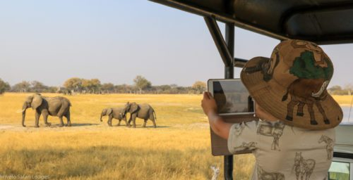 young girl take a photograph of elephants with her cell phone