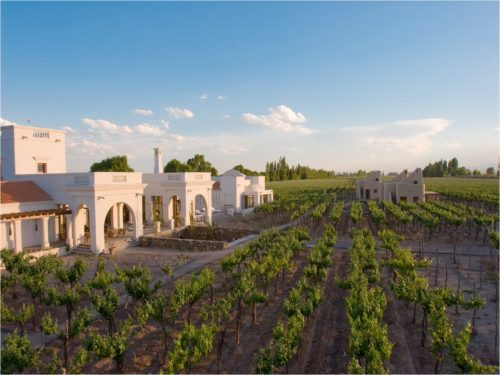 vineyard with white building and blue sky