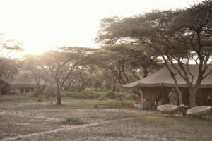 canvas tents set up under a canopy of trees in the remote Serengeti National Park