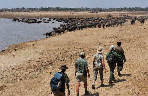 crocodile_camp_walking_safari