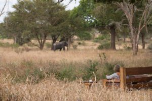woman sitting in a chair at camp looking out at elephants